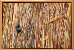 Enjoy the Annual Birds in Art Exhibit at the Woodson Art Museum