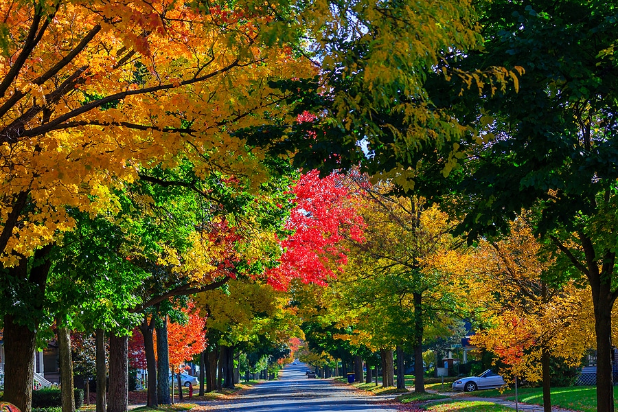 Beautiful fall foliage and more great things to do in wausau this fall