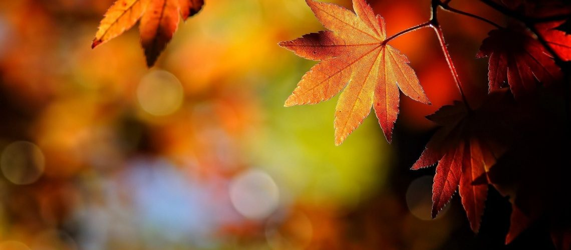 See The Best Fall Colors in Wisconsin This Year in Wausau